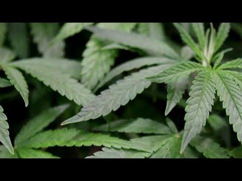 Oklahoma votes on medical marijuana