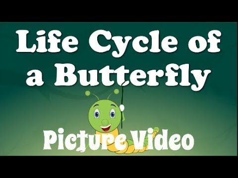 Butterfly Butterfly A Song For Kids About 10