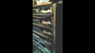 Старый шкаф для содержания перепелов#(, 2015-04-01T19:19:09.000Z)