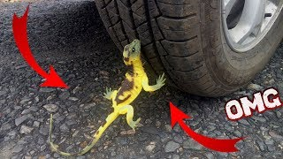 Crushing Crunchy and Soft Things by Car! - Experiment Iguana vs Car