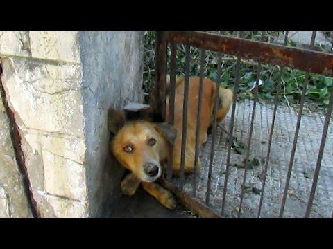 Как спасают собак и кошек
