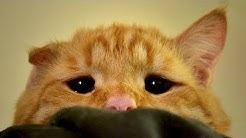 Kätzchen schaute extrem traurig - Der Grund ist herzergreifend!