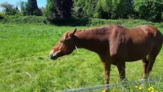По полям и лугам ходят кони тут и там, Аnimals,Tiere