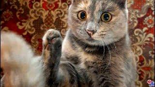 Кошка притащила своих деток на предприятие спасая их от своры голодных собак