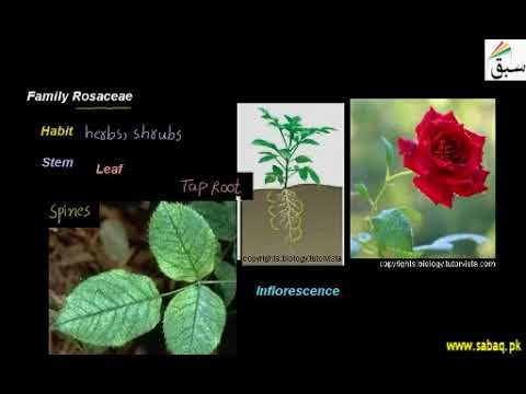Family Rosaceae | 1st year Biology | swap education portal