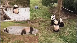 2021-03-17 Xiao Qi Ji ~ What's Black & White, And Green All Over?