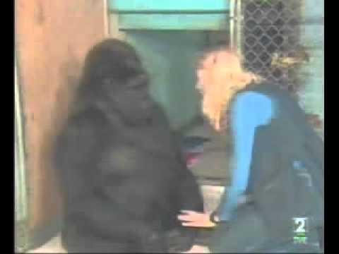 Gorila koko llora por la muerte de robinWilliams