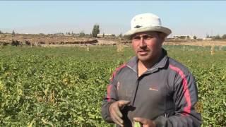 هذا الصباح-المكدوس أبرز مكونات الإفطار في بلاد الشام