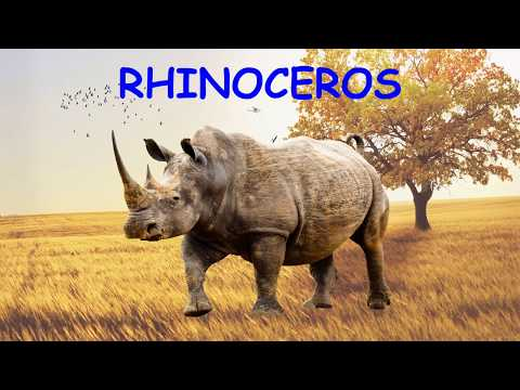 Learn English Words - African Animals