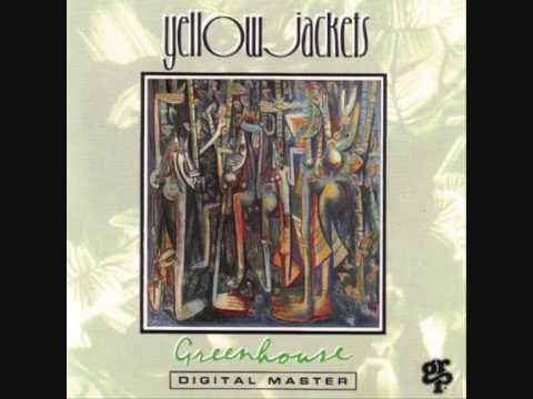 Yellow Jackets   (Seven Stars)