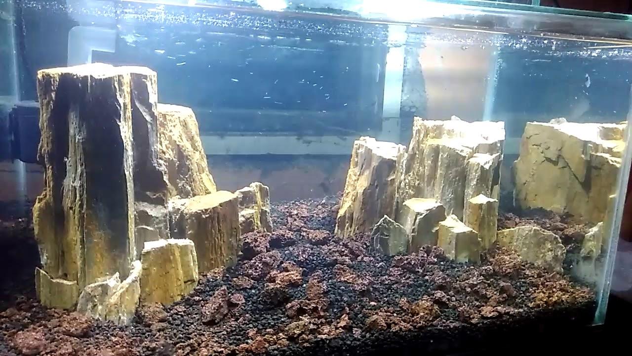 Aquascape Pake Batu Fosil Youtube
