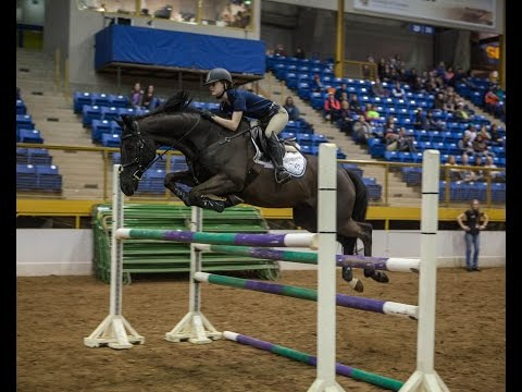 2016 Colorado's Most Wanted Thoroughbred Competition