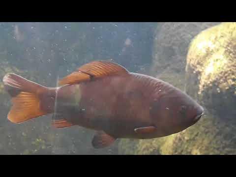 Aquarium at Horniman Museum & Gardens UK