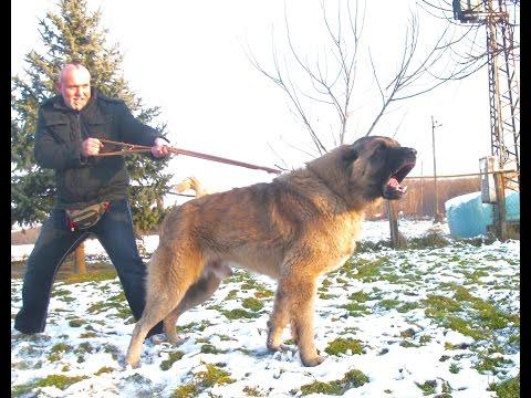 JOZO DOG - ZELOV 3 months old
