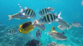 Египет Отель Siva Sharm Февраль 2020г