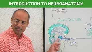 Introduction to Neuroanatomy - Central Nervous System