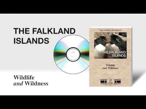 The Falkland Islands - Wildlife and Wildness