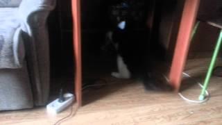 Кот ведет себя странно во время игры