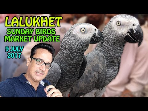 Sunday Birds Market Lalukhet Karachi update | Cheap Price Birds | video in Urdu/Hindi