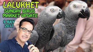 Sunday Birds Market Lalukhet Karachi update   Cheap Price Birds   video in Urdu/Hindi thumbnail