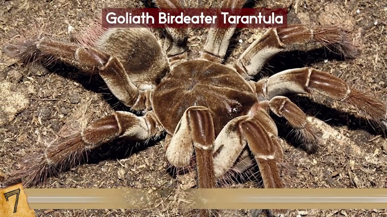 The 10 Most Amazing Spiders In The World Spider Aholic