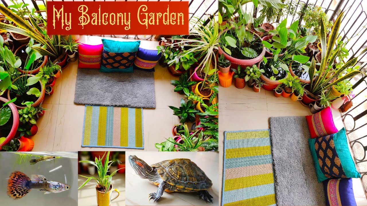 Balcony Garden tour part -2 || My balcony Garden with plants, fish, turtle, Guppy fish.