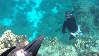 Guam Spearfishing  671 #3