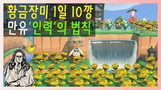 모동숲 교배꽃 초보 꿀팁영상 금장미 1일 1깡?? 1일…