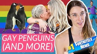 The gay penguins are thriving | Fortnitely News #1 | Riley J. Dennis