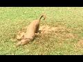 Funny Dog Mud Bath