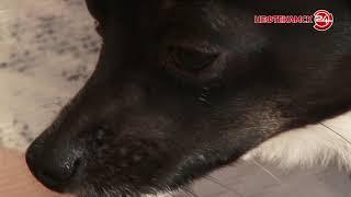 В собаку выстрелили из «пневматики»
