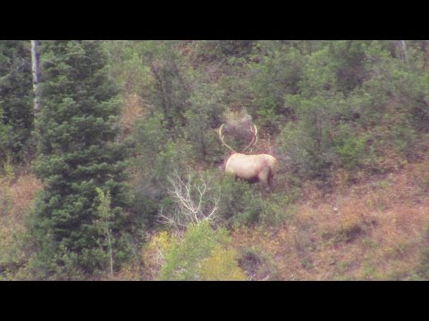 Wasatch Front Extended Archery Elk 2015