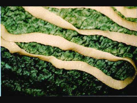 viermi din interior primele semne de viermi