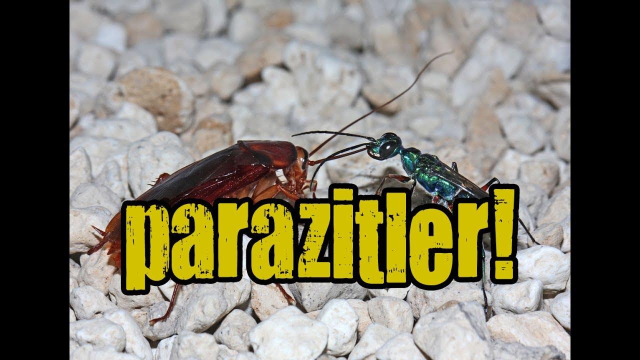 parazit znacenje tipuri de condilomi de negi