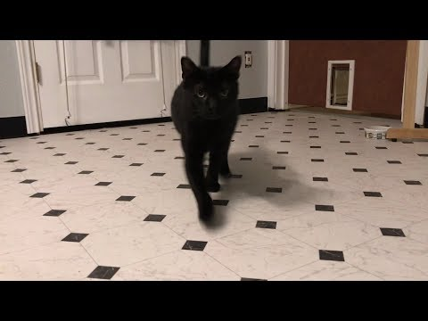 Jones the cat compilation 2019 march
