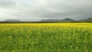 Moment in Iceland: Yellow Fields Forever (music)