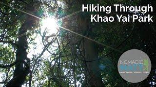 Hiking Through Khao Yai National Park