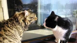00256   коты орут друг на друга на подоконнике Полета