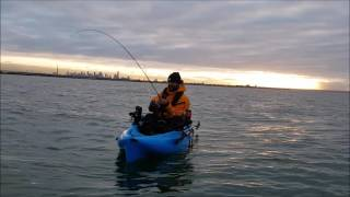 Kayak Fishing Snapper BIG RED 85cm Altona PPB Soft Plastic