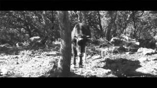 La Vaca De L'Albera