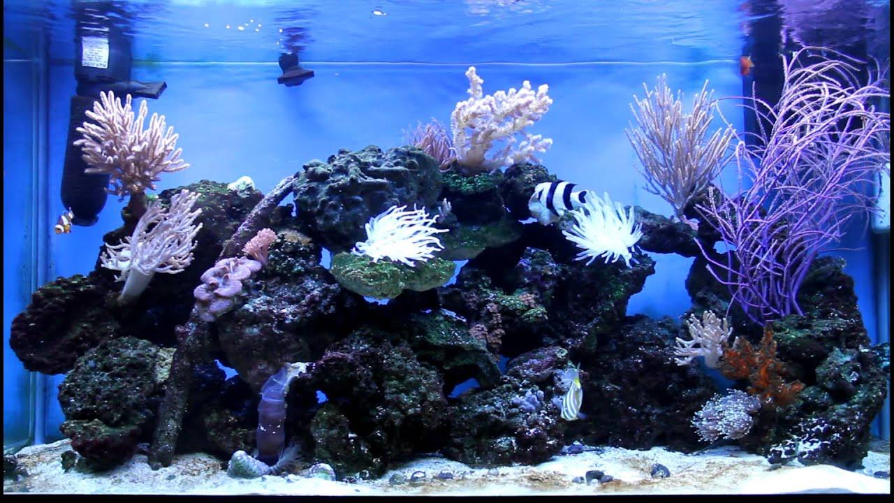 Aquarium Safety. - YouTube
