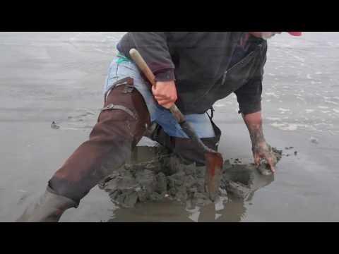 Ocean Shores Clam Dig 2016