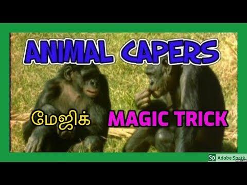 MAGIC TRICKS VIDEOS IN TAMIL #133 I ANIMAL CAPERS @Magic Vijay