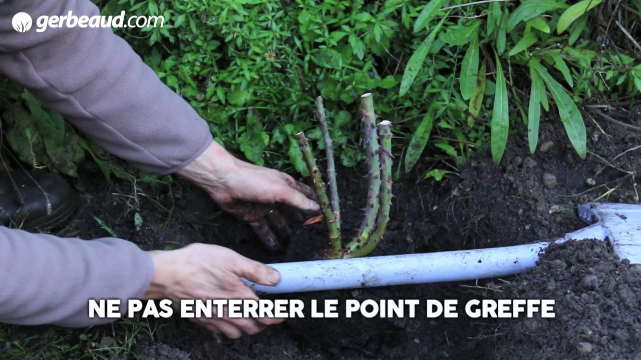 Planter un rosier - YouTube