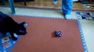 Drona vs pisica