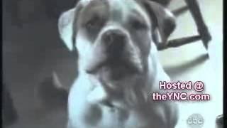 Смотреть Говорящие животные онлайн