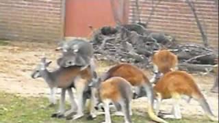 Dever Zoo