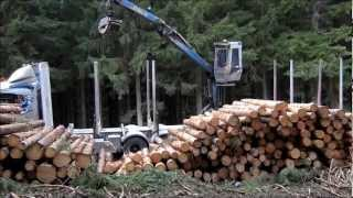 Scania R730 V8 6x4 Timber Truck Loading