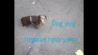 DOG VLOG первая прогулка