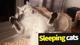 Sleeping Cats Compilation - Adorable Cats Asleep